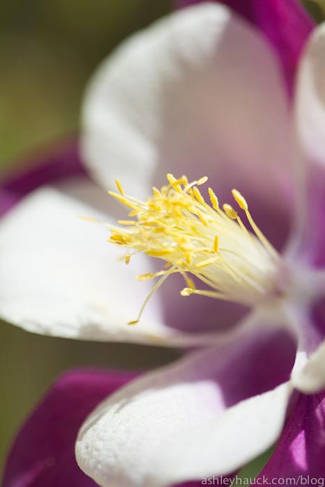 Flowers at Casa de Balboa, Balboa Park, San Diego, California
