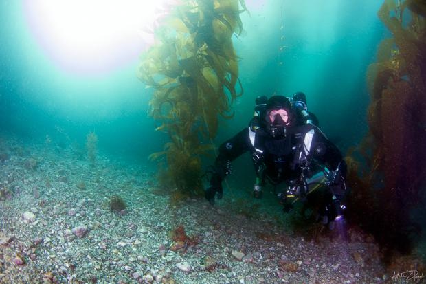 catalina chamber day-kelp-diver-2