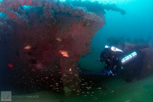 USS_Hogan_Wreck_15