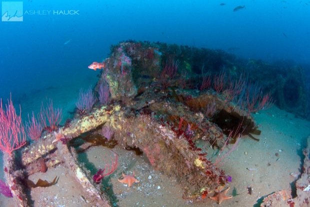 USS_Hogan_Wreck_24