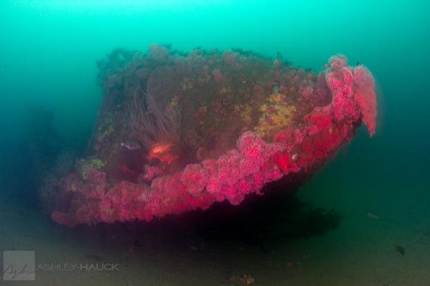 USS_Hogan_Wreck_30