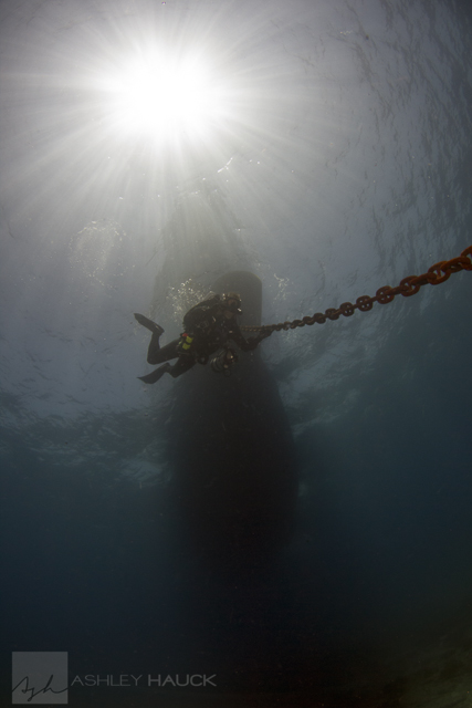 Sea of Cortez diving: Diver under the Nautilus Explorer, Sea of Cortez, Mexico