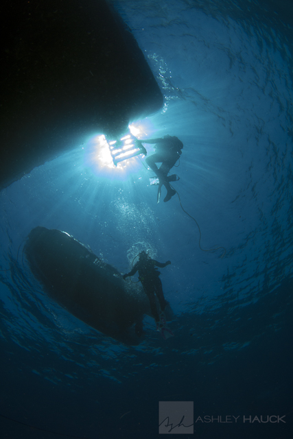 Sea of Cortez diving: Divers under the Nautilus Explorer, Sea of Cortez, Mexico