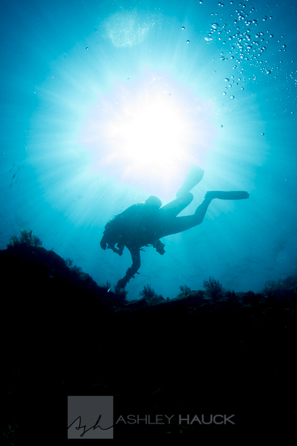 Sea of Cortez diving: Diver at La Reina, Sea of Cortez, Mexico
