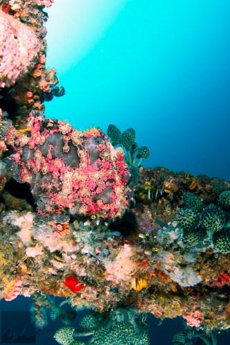 Anilao, Batangas, Philippines: Frogfish