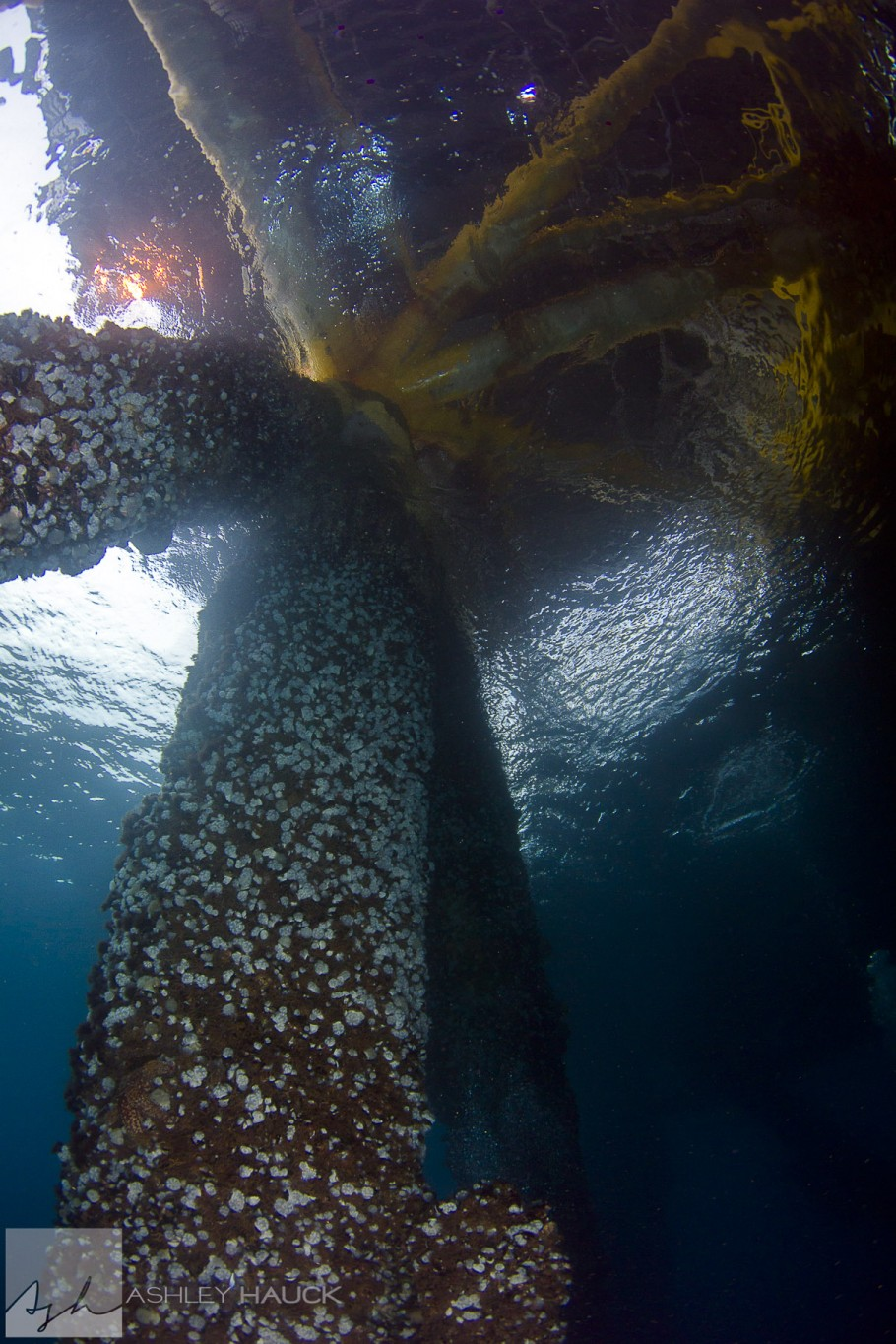 Diving the Eureka Oil Rig