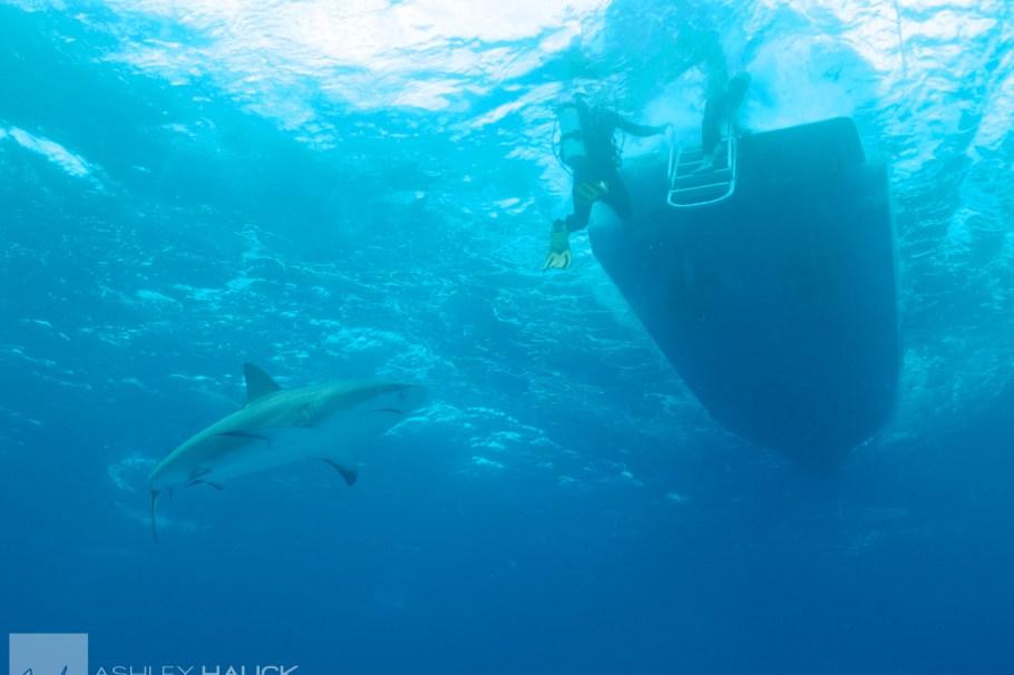 shark-topaz-clean