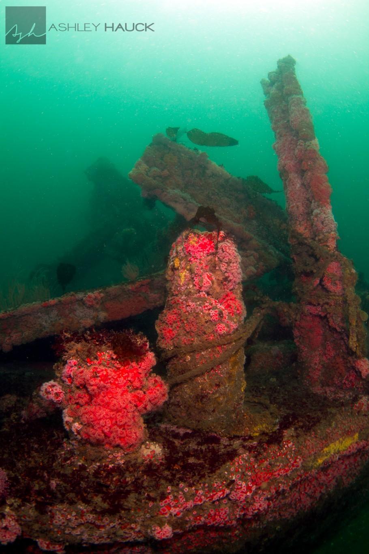 San Diego, California: El Rey Wreck