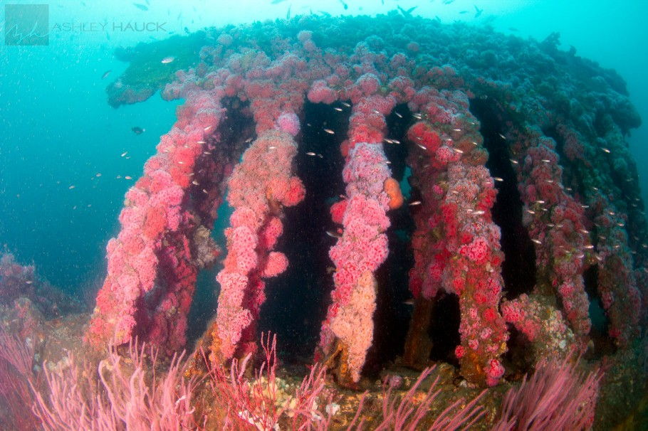 USS Moody Wreck