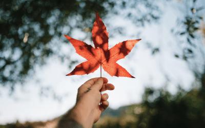 Maple Balsamic Dressing: MY EAST COAST KITCHEN