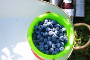 Blueberries Superfruit Puree