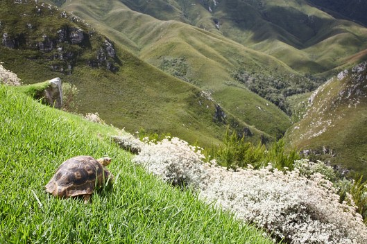 tortoise looking out at hills