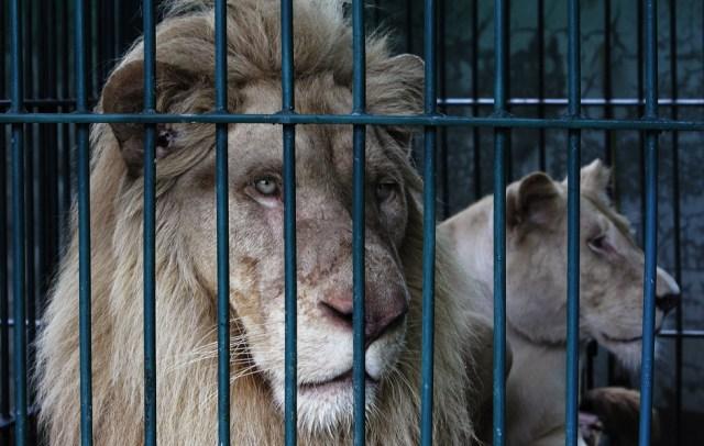 leoni bianchi a bangkok