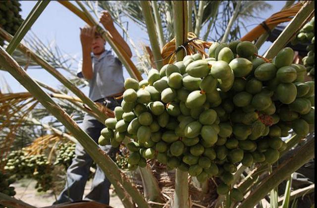 israel palestinian kids