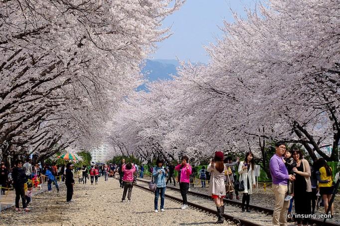 Jinhae-Gunhang-Festival-진해-군항제-Jinhae진해-South-Korea-682x453
