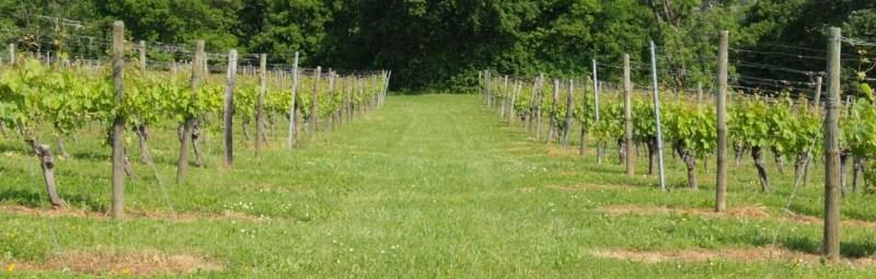 DomaineDupraz_vineyards