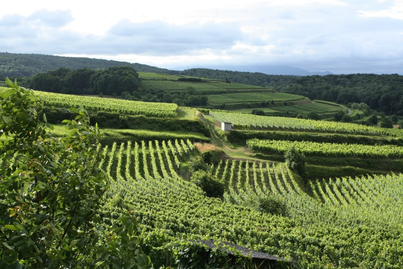 Taster Wines A/S Asia Import News