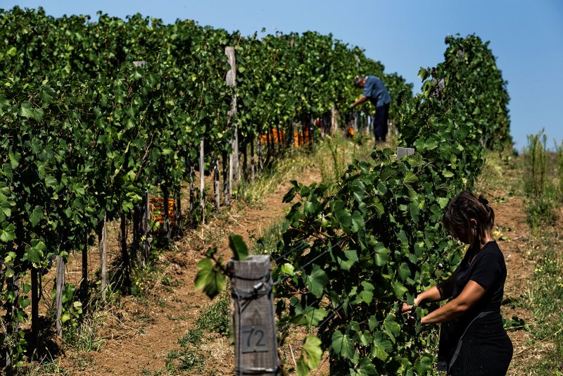 Winery Lastar Asia Import News