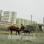 "An oxcart at the roadside. Behind the ox, the slogan reading ""Forward toward the future with full of courage"" can be seen. (Taken by our reporting partner in South Pyongan Province, March 2013.) ASIAPRESS"