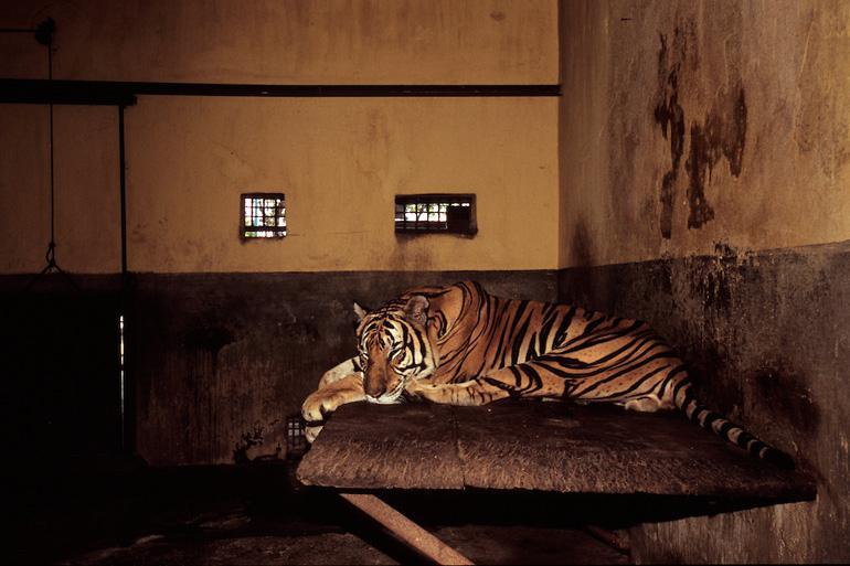 Hanoi Zoo