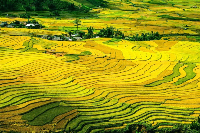 Unending beauty of mountainous Northwest, Vietnam in Autumn - Asia Tour Advisor