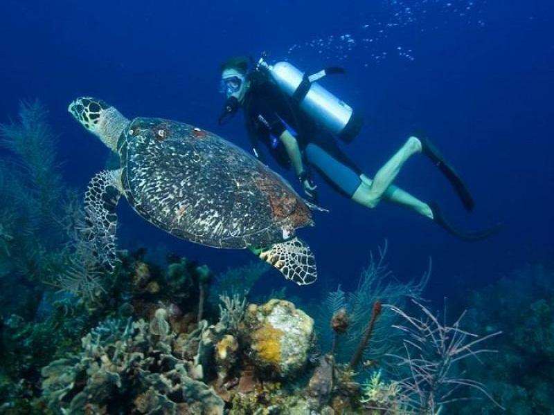 Vietnam –Paradise-for-divers3