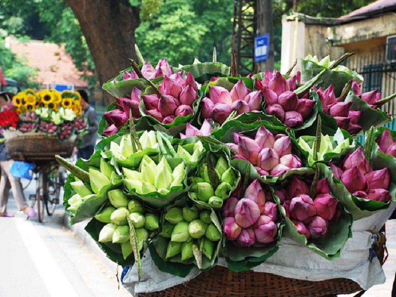 4-most-charming-summer-flowers-in-Hanoi3