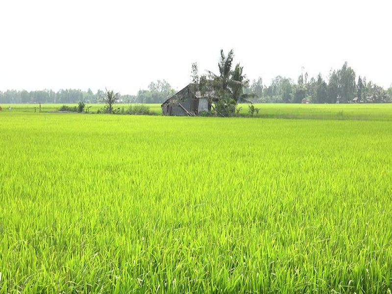 A-brief-look-at-Mekong-Delta-tours1