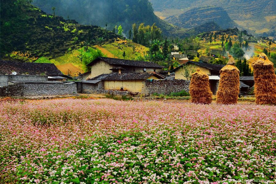 Ha Giang - every season is beautiful
