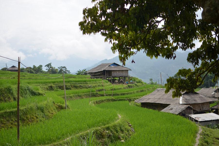 Phung Village Hoang Su Phi, Things to do Phung Village Hoang Su Phi