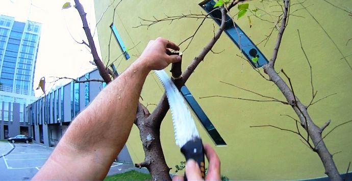 Tree Pruning Training