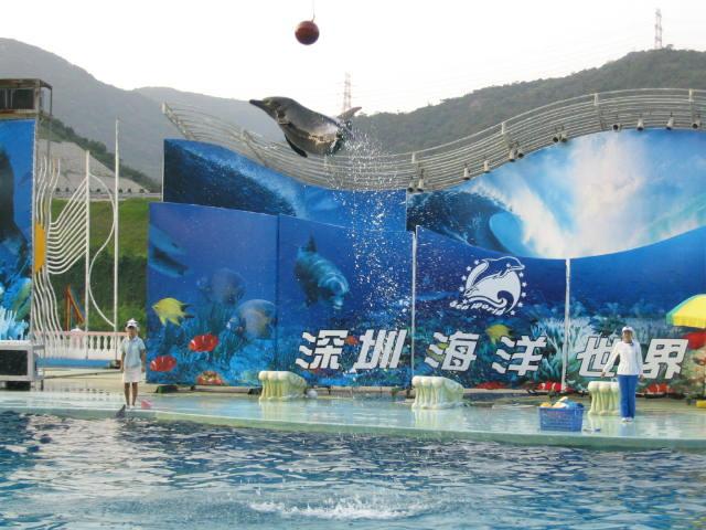 Hasil gambar untuk Sea World shenzhen