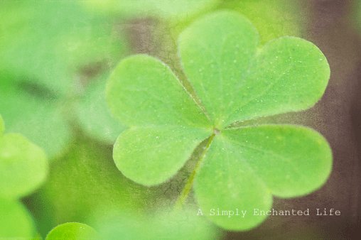 Clover Photography