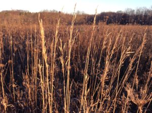 Lessons from the Prairie II