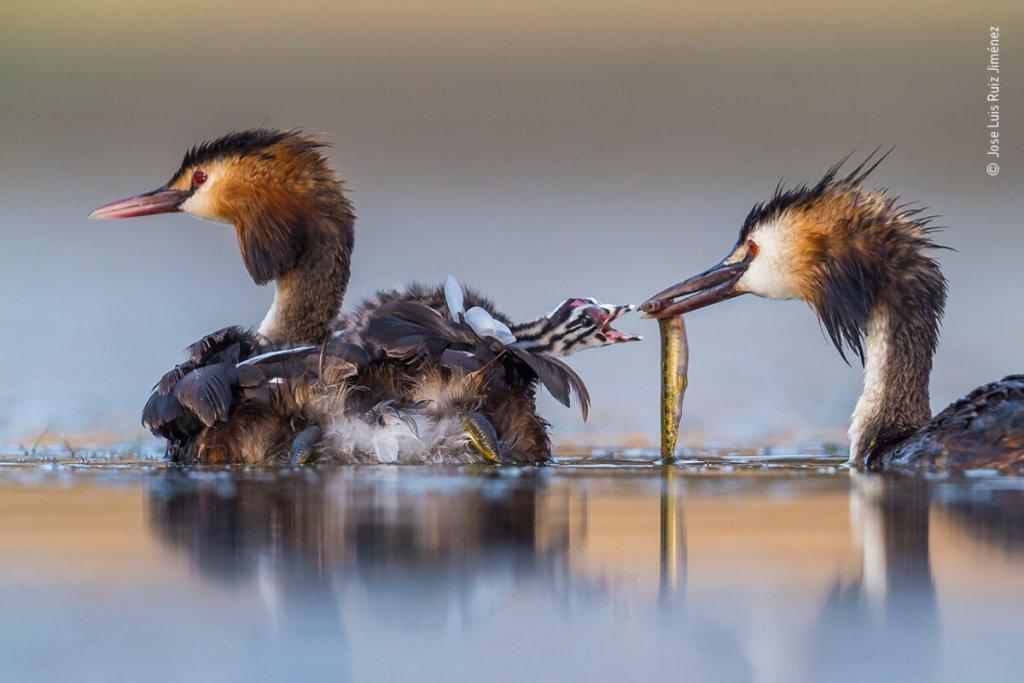 Απολαύστε το μεγαλείο της φύσης μέσα από βραβευμένες φωτογραφίες