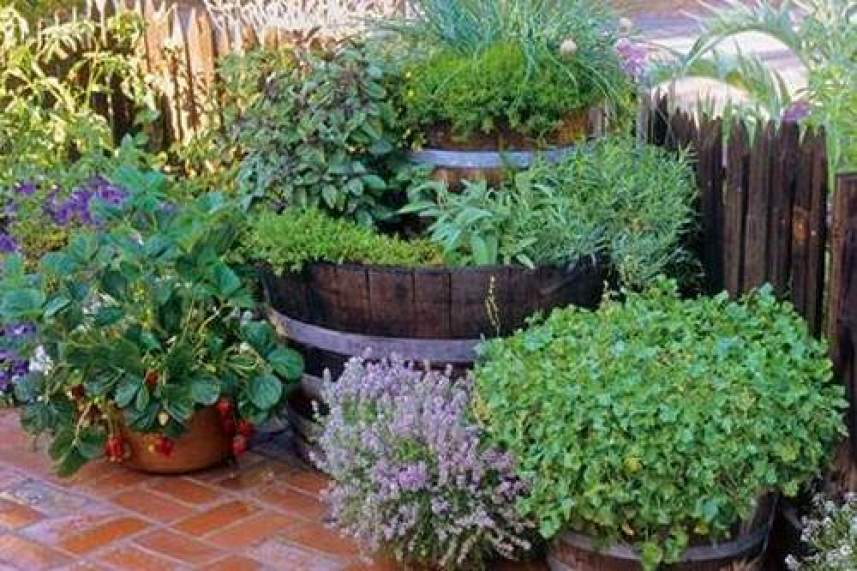 61 Fruits and Veggies You Can Grow in Buckets