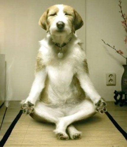Resultado de imagen para DOGS AND EXERCISE