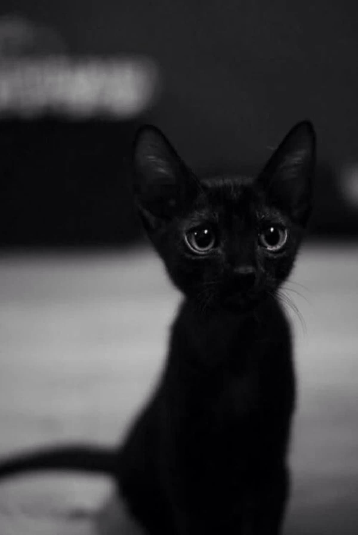 Black Kitten Red Eyes