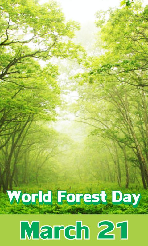 The food and agriculture organisation of the united nations also. 20 Best World Forest Day 2017 Pictures