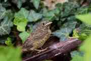 "Critical Appreciation of ""Ode to Nightingale"" 