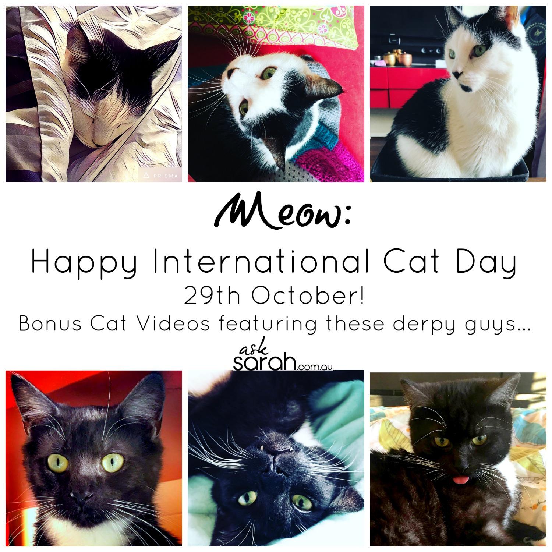 Happy International Cat Day 29th October! Bonus Cat Videos...