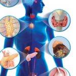 Endocrinology department askwebdr