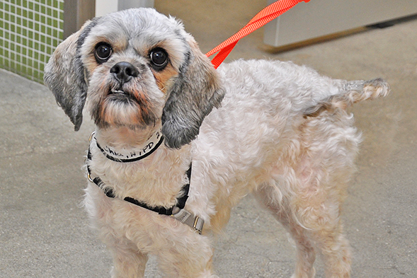 A Haircut Could Save A Life Preventing Your Pets Coat