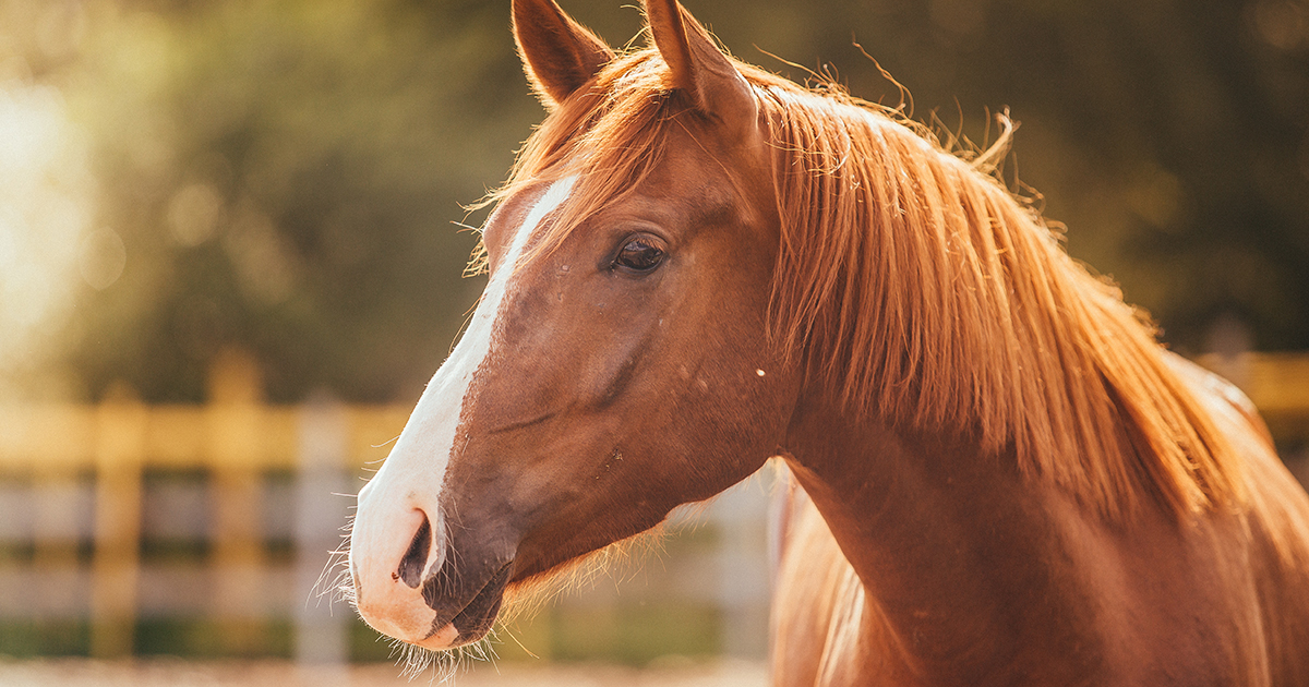 Exciting News For At Risk Horses The Aspca Granted More