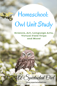 Homeschool: Owl Unit Study