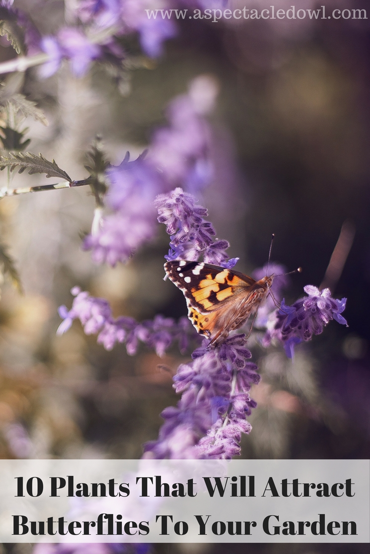 10 Plants That Will Attract Butterflies To Your Garden