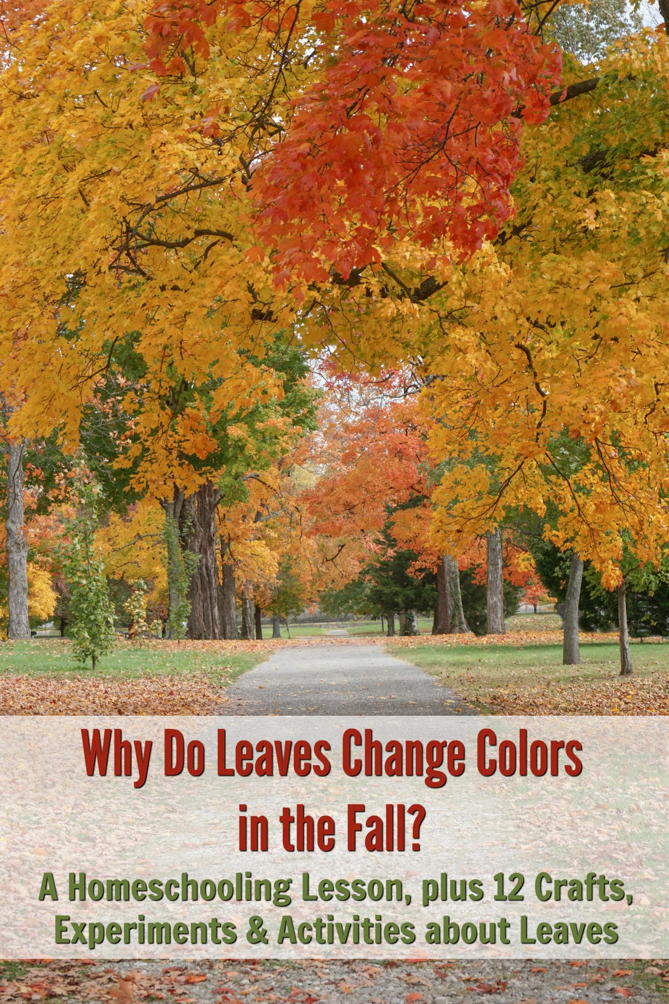 Why Do Leaves Change Colors In The Fall A Homeschooling