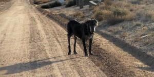 Neo Mastiff on dirt road