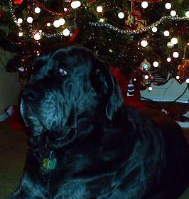 A Neo Mastiff Christmas Message