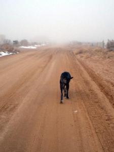 Neo Mastiff walking on dirt road in fog